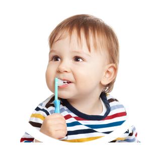 À quoi servent les molaires ?